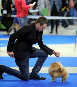 International Dog Show (CACIB) Nadarzyn