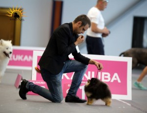 International Dog Show (CACIB) Krakow