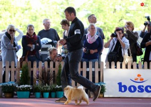 25/09/2016 XIV International Dog Show CAC/CACIB WROCŁAW/Poland